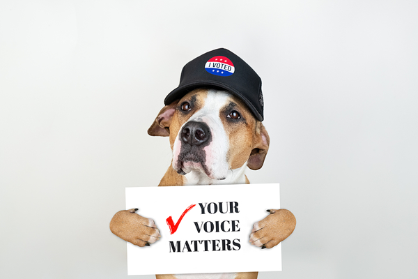 your voice matters - use active voice