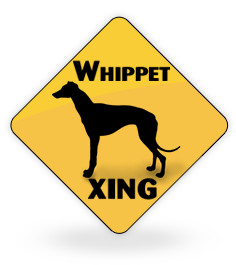 Whippet Xing