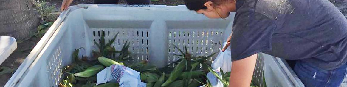 Student and Corn Bin