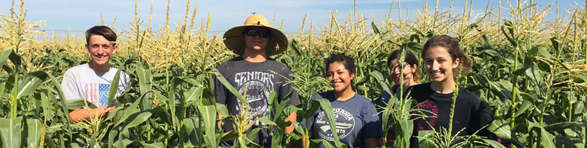 Tulare FFA Students in Corn Field