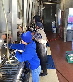 Tulare FFA Students Milking Cows