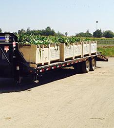 Tulare FFA Corn Truck