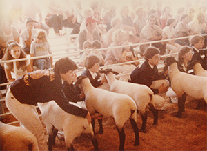 FFA members showing sheep