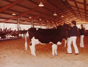 cows and FFA members