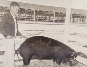 black and white picture of a young FFA student and a pig