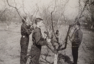 black and white picture of FFA students pruning a tree