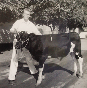 black and white photo of cow and man