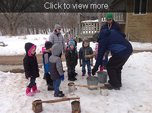 Students and teachers prepare to collect sap from a tree using buckets