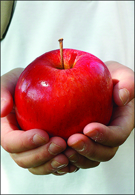 Young student hands holding a red apple
