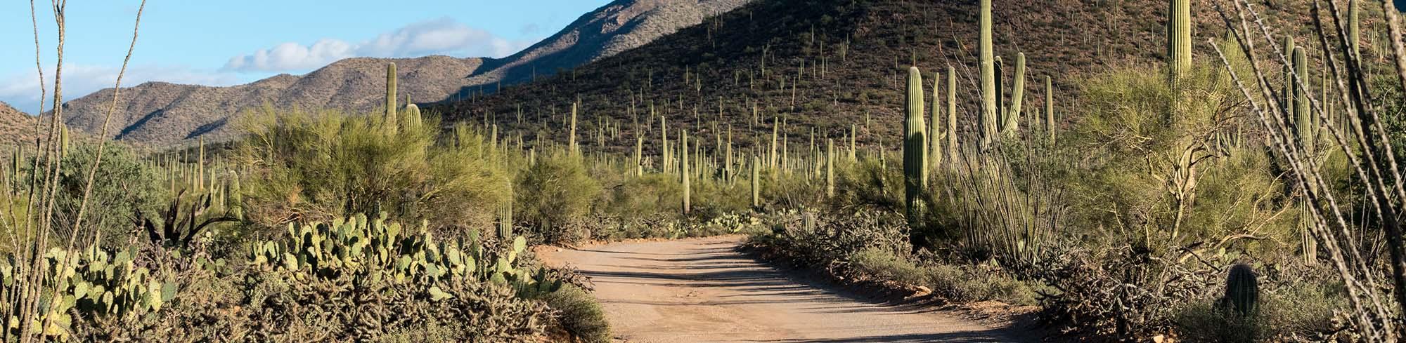 Desert road with cactus