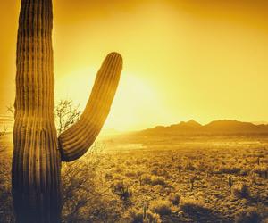 A cactus in a desert landscape
