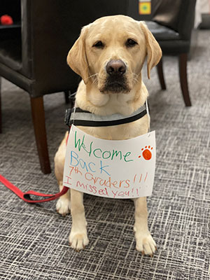 Class dog welcoming back 7th grade students