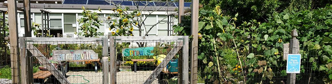 Farmingville Sprouts garden