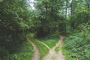 a path in the woods dividing into two paths