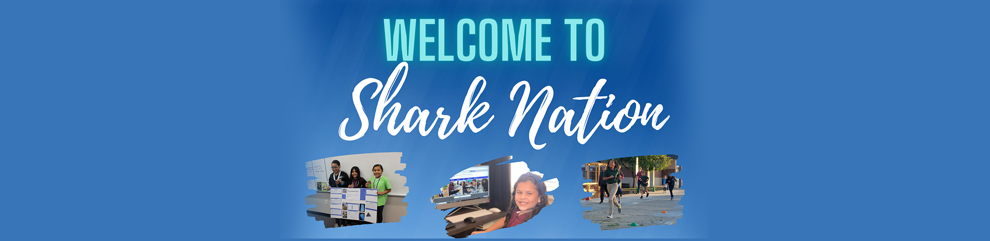 Welcome to Shark Nation