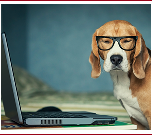 Smart dog wearing glasses in front of laptop