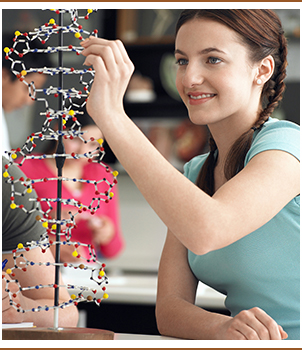 Female student works on a DNA model