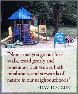 David Suzuki Quote