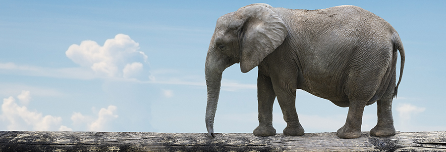 Elephant balancing on a tree trunk