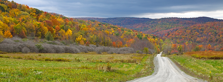 Fall view of colorful trees on the mountains