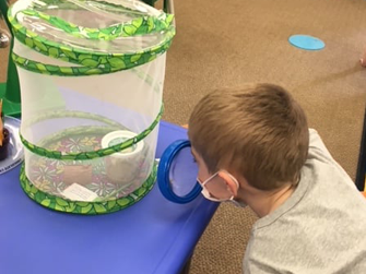 Pre-K student looking at butterfly container