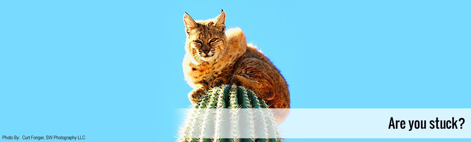 Bobcat on Cactus