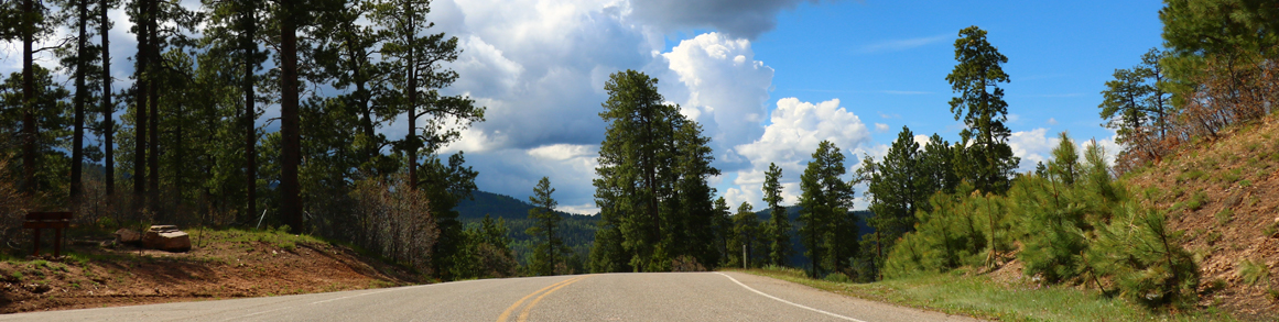 road with trees and sky