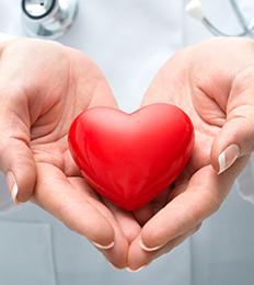 nurse holding plastic heart