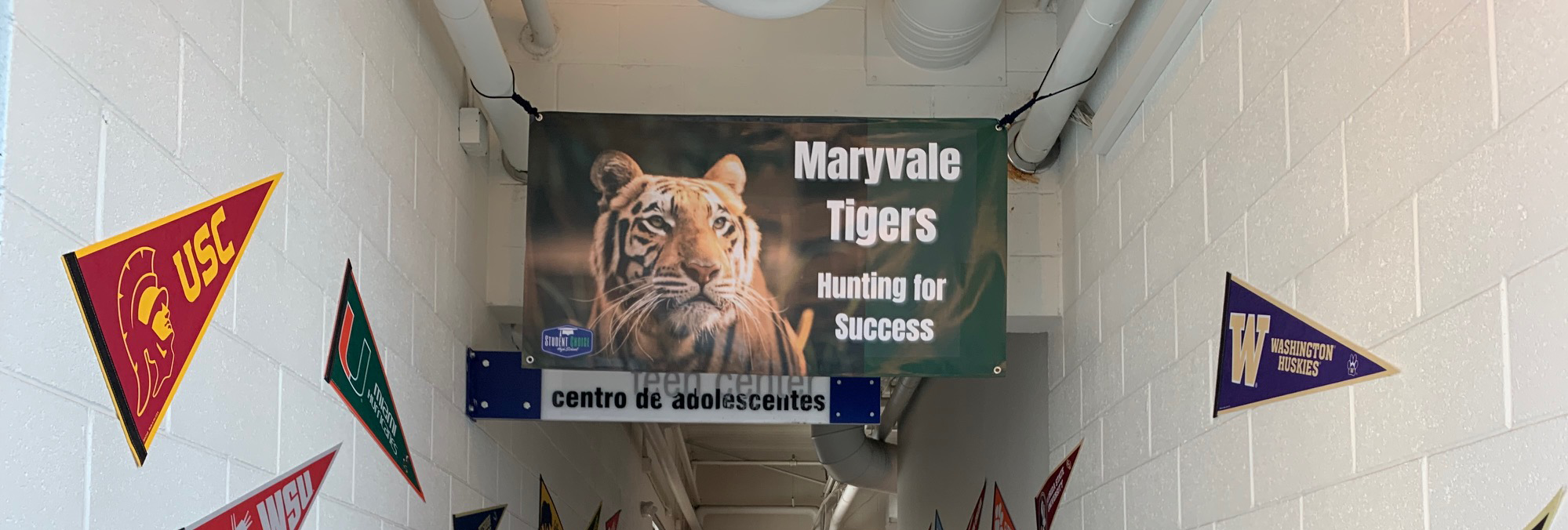 Maryvale Tigers - Hunting for Success