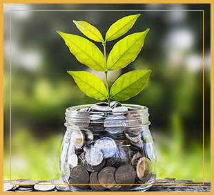 Plant inside a jar filled with coins