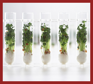 science beakers growing plants