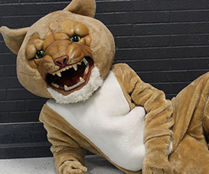 Cougar mascot poses on the floor