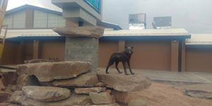 Lobo statue in front of school sign