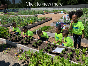 Click for more photos. Students look at plants in a garden bed.