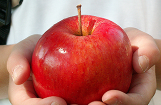 Apple in a student's hand