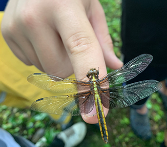 Closeup of student holding a dragonfly