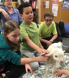Students petting a lamb in a classroom