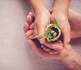 Adult hand helping student hold a baby plant in eggshell