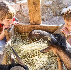 Two children observe farm animals