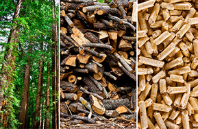 trees, logs and wood chips