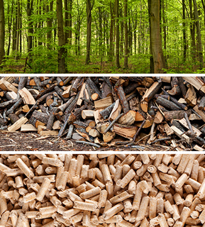 trees, wood logs, and pellets