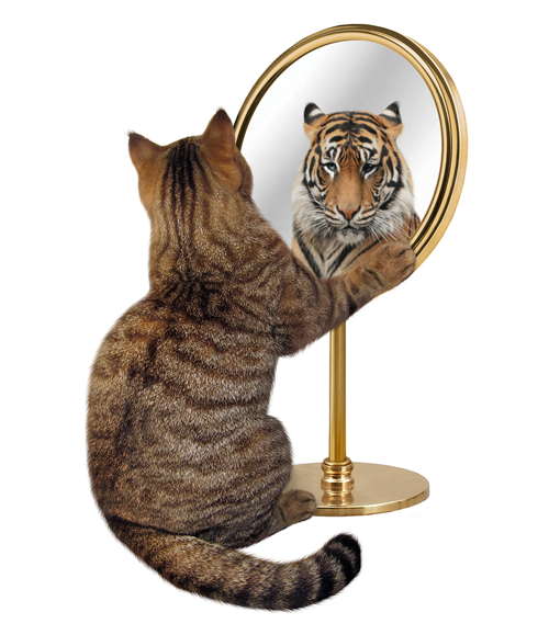 Cat looking in mirror and seeing a lion