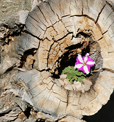 a pretty little flower growing out of a stump