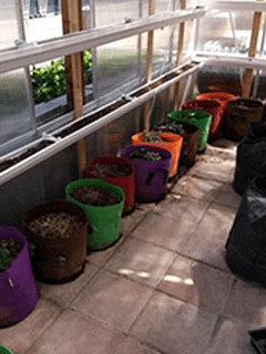 row of fabric bag container gardens