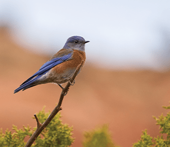 Beautiful blue and orange colored bird perched on a tree branch