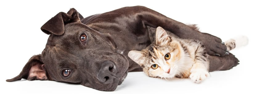 Dog and Cat Laying Peacefully