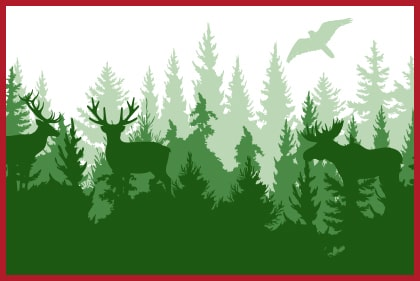 green forest graphic
