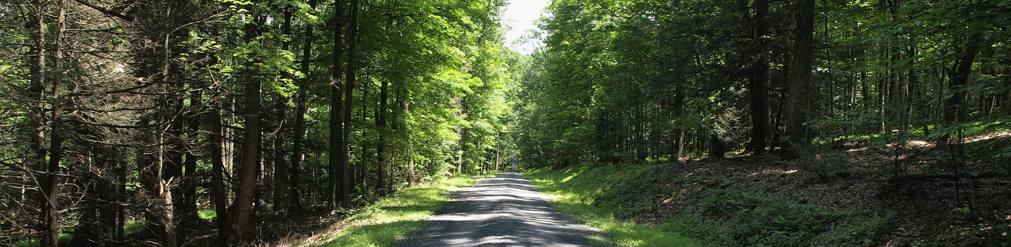 Country road in the northeast lined with trees