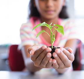 Student holding up a seedling grown in classroom