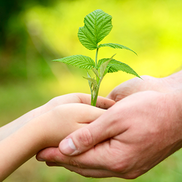 Child and adult hands holding a growing plant